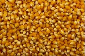 Organic, non gmo popping corn is the best choice!