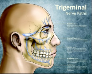 There's the sneaky, painful culprit, the trigeminal nerve!