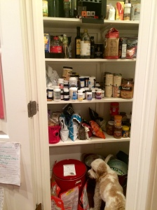 If I've got the pantry door open, Chewie is in there checking it all out!