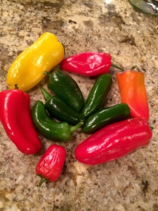 Gorgeous peppers- Peter would definitely want these, even before they're pickled!
